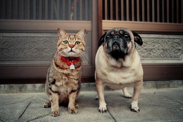 GWはねこ祭り 「ネコ歩き」岩合光昭さんの写真展、全国15会場で