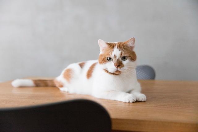 <1>ものが少なくシンプルに暮らすのが、猫も人も心地よい ~どんこ