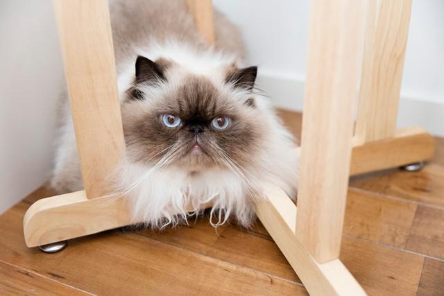 〈猫と暮らすインテリア〉ぐーぐー&岡部邸(3)