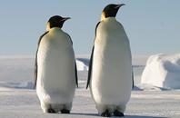 こんなに違う南極と北極