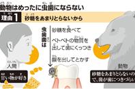 動物と虫歯