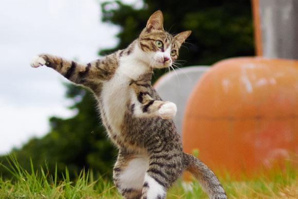 この動き、まさに芸術 「のら猫拳」