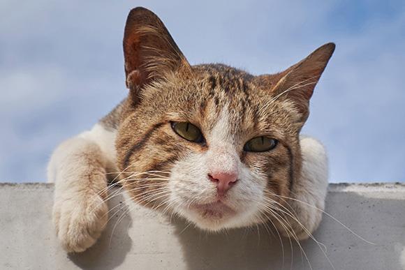 どこかおかしい、くすりと笑える愛すべき「へん猫」たち