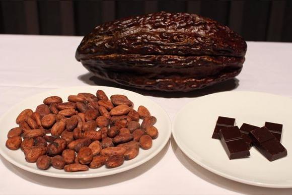 チョコレートと脳の関係を解明する研究が本格始動