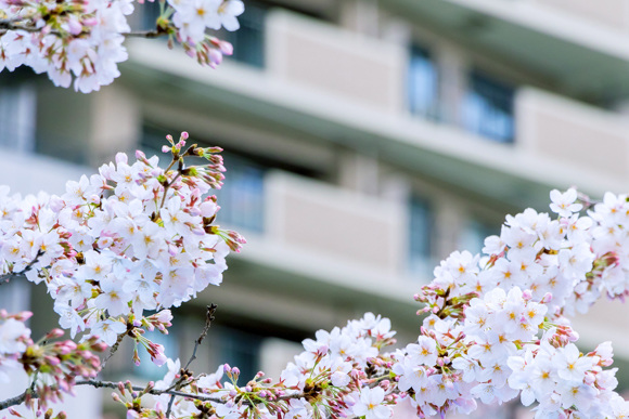 東京タワーが見える家より桜が見える家のほうが価値がある?