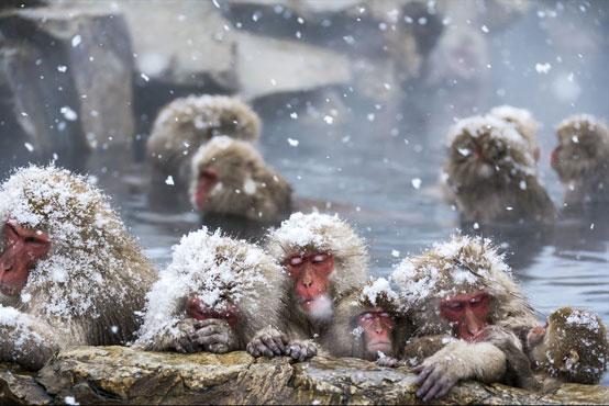 こざる温泉 会いに行けるしあわせ動物