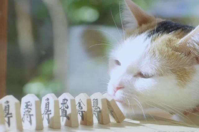 """「3月のライオン」の世界観を""""ピタゴラ装置""""で"""