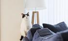 猫2匹が、オンとオフの切り替えに~ナツメグ・ハチミツ