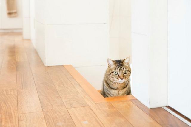 〈猫と暮らすインテリア〉ロイ&大沢邸(10)