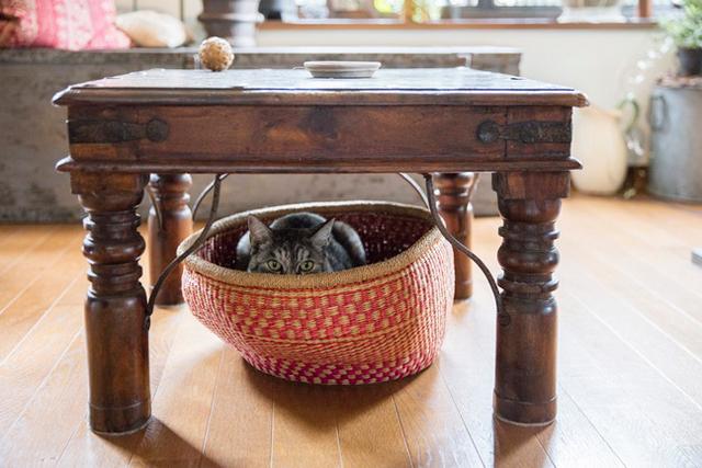 古い家具に囲まれ、人生の相棒と暮らす