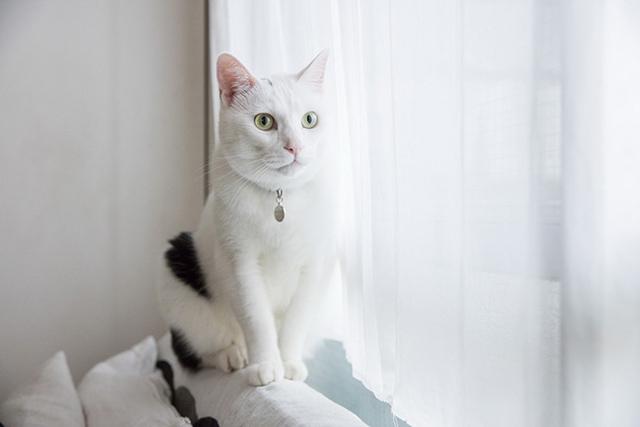 〈猫と暮らすインテリア〉ミレー&イナキ邸(5)