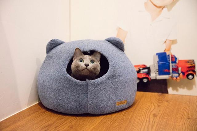 〈猫と暮らすインテリア〉アメリ・クロエ&石川邸(7)