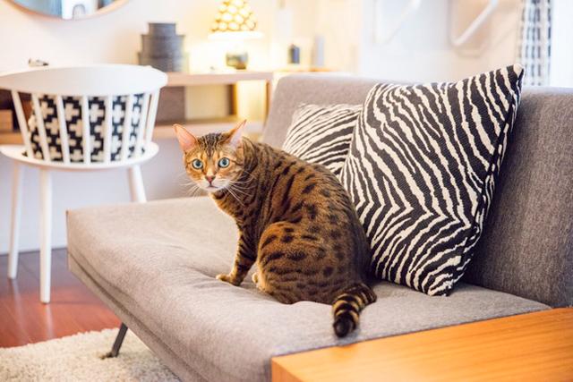 〈猫と暮らすインテリア〉サイファ&石川邸(11)