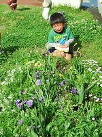 保育園行かない 花を手前にすると写真がメルヘンになりますよ♪