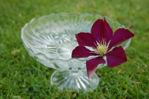 写真:花をいけるのにもよさそうなガラスのコンポート、2ポンド。ヴィンテージでもなんでもないが、新品を買えば10ポンド以上はするので、形さえ気に入ればお買い得だ