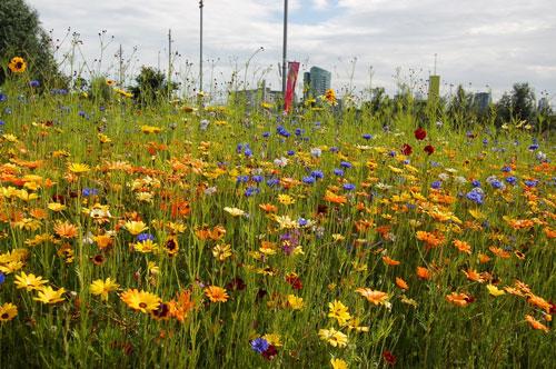 写真:オリンピック・パークのガーデンデザインは、シェフィールド大学教授のNigel Dunnettさん、 James Hitchmoughさんと、ガーデンデザイナー Sarah Priceさんを中心になされた