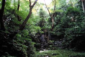 写真:「武蔵野の原風景」を思わせる皇居内の雑木林=矢島稔さん提供