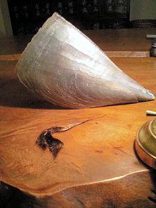 写真:タイラギの貝殻と足糸(手前)。タイラガイ、タチガイという通称もあるイガイ目・ハボウキガイ科に属する二枚貝。殻は飴細工のように薄く割れやすい