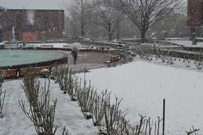 雪をかぶった庭園=福岡県久留米市野中町の石橋文化センター