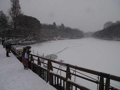 水質浄化のため水を抜いている井の頭池の池底は雪で白一色になった=東京都三鷹市の都立井の頭公園