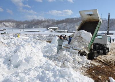 街中の雪がトラックなどで次々に運び込まれた=宮古市小山田の閉伊川河川敷