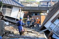 捜索活動をする救助犬=16日午前7時14分、熊本県益城町、内田光撮影