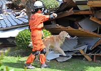 倒壊した家屋に取り残された人を捜す救助犬=17日午後2時1分、熊本県益城町惣領、籏智広太撮影