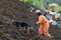 熊本県南阿蘇村の高野台団地で捜索にあたる和歌山災害救助犬協会の災害救助犬=17日午後2時28分、長沢幹城撮影