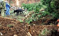 土砂崩れがあった温泉宿泊施設で行方不明者の捜索活動が続き、海上自衛隊の災害救助犬も加わった=18日午前10時4分、熊本県南阿蘇村、長島一浩撮影