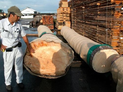写真:製材工場に搬入された「奇跡の一本松」の幹。加藤徳次郎社長(左)は「緊張しますね」と話した=15日午前6時58分、愛知県弥富市のヤトミ製材、鈴木祥孝撮影
