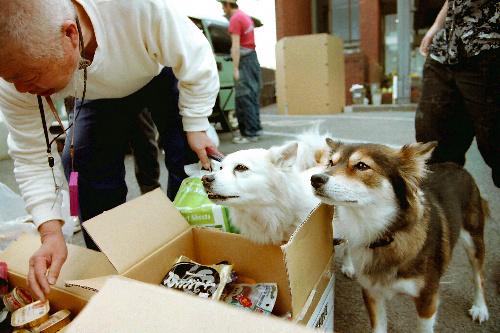 写真:避難所で飼い主に付き従う犬=4月上旬、宮城県多賀城市、藤添尚子さん撮影