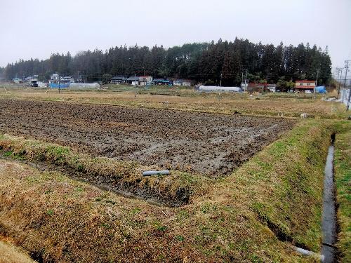 写真:放射性物質による土壌汚染が懸念される飯舘村の水田。今年の作付けができないおそれが出ている=9日午後2時ごろ、木村写す