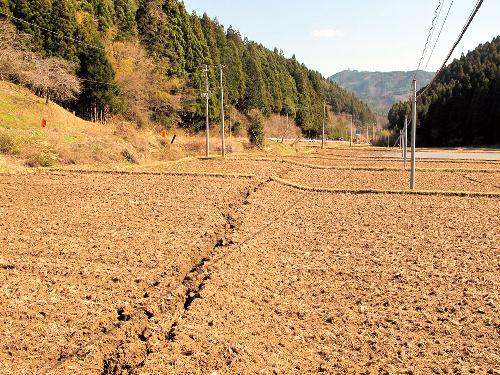 写真:いわき市大久保地区の田で確認された断層=八木浩司山形大教授提供
