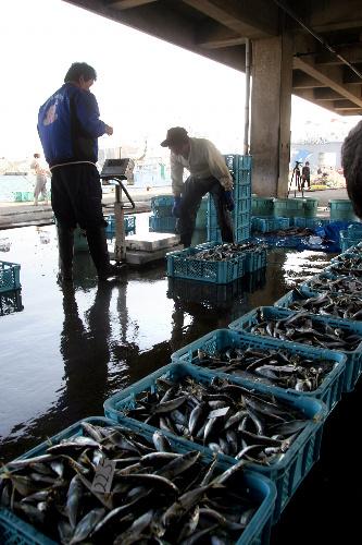 写真:茨城県の久慈町漁協が底引き網漁を再開。ほぼ1カ月ぶりに水揚げされた魚が漁港に並んだ=15日、同県日立市、成田認撮影