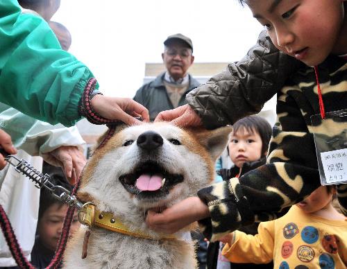 写真:被災して新たな飼い主を待つ犬と触れ合う人たち=23日午後、仙台市宮城野区、中里友紀撮影