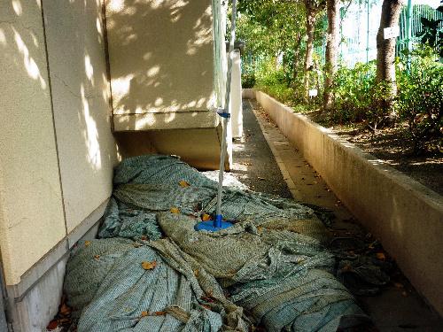 写真:1キロ当たり約9万ベクレルと、高濃度の放射性セシウムが検出された東京都杉並区立堀之内小のシート。現在は区の施設の屋内に移して保管している=11月2日、東京都杉並区堀ノ内の同小