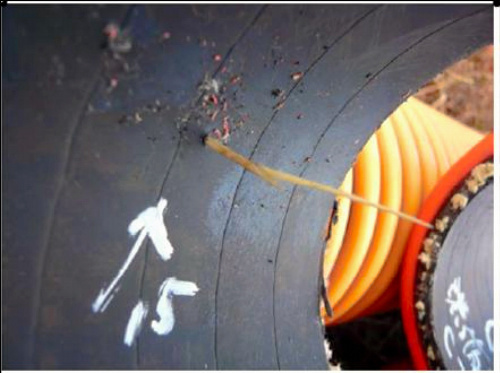 写真:ホースの内側に貫通した雑草のチガヤ(中央)=東京電力提供