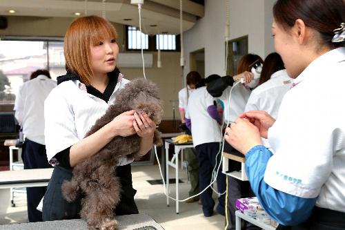 写真:犬の美容師を目指し、学校に通い始めた伊藤茜さん=2月13日、仙台市太白区、恒成利幸撮影
