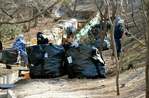 写真:落ち葉や枝を集めて袋に入れていく作業員たち=7日午前9時43分、福島県楢葉町、青木撮影
