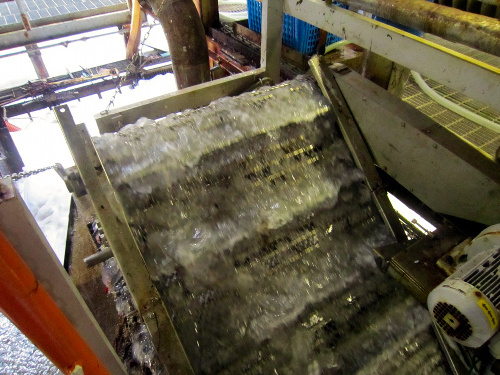 写真:大飯原発の取水口からコンベヤーでくみ上げられるクラゲ=関西電力提供