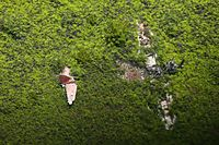 パラオのバベルダオブ島の草原に放置された旧日本軍の零戦。朽ちているものの原形がうかがえた=8月29日、パラオ、朝日新聞社機「あすか」から、橋本弦撮影