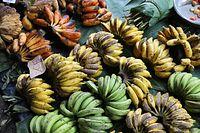 バナナだけでも数種類。日本では見たことがないものもあった=9月7日、ソロモン諸島・ガダルカナル島、橋本弦撮影