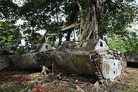 並べられた水陸両用トラクターからは大きな樹木が生え、時の流れを感じさせた=9月7日、ソロモン諸島・ガダルカナル島、橋本弦撮影