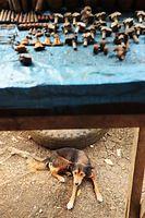 棚に陳列されたネジや薬莢(やっきょう)=9月2日、ソロモン諸島・ガダルカナル島、橋本弦撮影