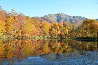 水面も秋景色、大野の刈込池で紅葉が見頃=2014年10月25日、大野市上打波、湊彬子撮影