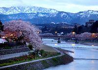早朝、犀川大橋から、残雪の山並みと桜橋を望む。右岸(左側)の「犀星のみち」を、満開の桜が彩っていた=2015年4月14日、金沢市、嶋田達也撮影