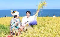 日本海を望む棚田で有名な「白米(しろよね)の千枚田」で地元のカップルが結婚式を挙げ、稲刈りをした=2015年9月22日、石川県輪島市、森井英二郎撮影