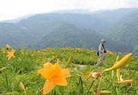 花々が見頃を迎えた白山高山植物園=2015年6月15日、白山市白峰、須藤佳代子撮影