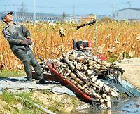 収穫した加賀レンコンを引き上げる=2015年10月21日、金沢市の河北潟、高橋一徳撮影