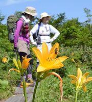 白木峰の浮島の池周辺で咲くニッコウキスゲ=2014年7月12日、富山市八尾町、深見朋子撮影